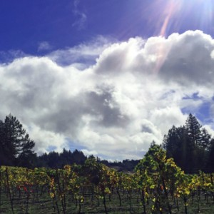 Winemaker Spotlight:  Senses Wines