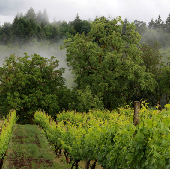 Raptor Ridge Winery in Willamette Valley