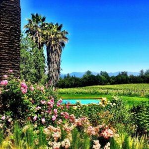 The vineyards of Spring Mountain Vineyards