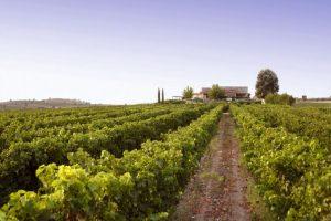 Rescuing a Varietal: Greek Wine & Vangelis Gerovassiliou
