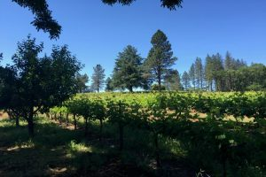 Summit Lake Vineyards: Vintner Bob Brakesman
