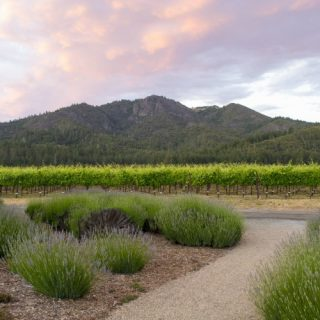 St. Francis Winery, with the Mayacamas piece by The Wine Siren Kelly Mitchell