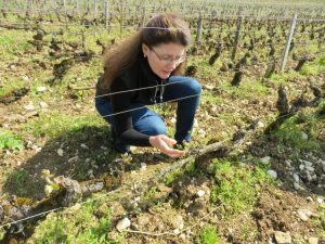 Julie Lumgair on The Wine Siren surveying vineyards winemaker