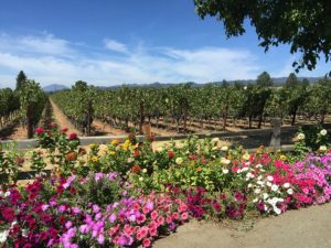 Rutherford Dust in Napa Valley via The Wine Siren, Kelly Mitchell