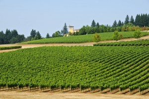 Willamette Valley Vineyards famed for Pinot Noir