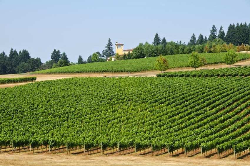 Willamette Valley Vineyards famed for Pinot Noir