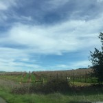 The Vineyards of Castucci Wines