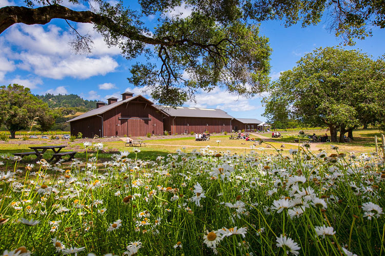 A French Domain in Anderson Valley: Domaine Anderson