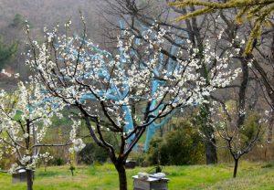 Chene Bleu - Blue Oak, Chene Bleu Wine
