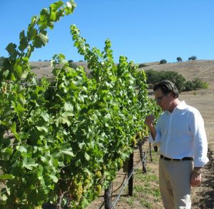 Vance Rose out in the Grieve Family Vineyard Lovall Valley