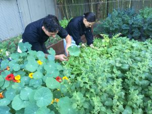 At 1313 Main each day is a day spent in the garden getting the freshest ingredients for dishes in Napa