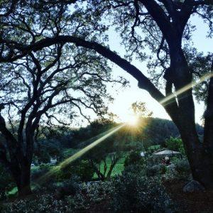 Sunset at Trinchero Napa Valley The Wine Siren