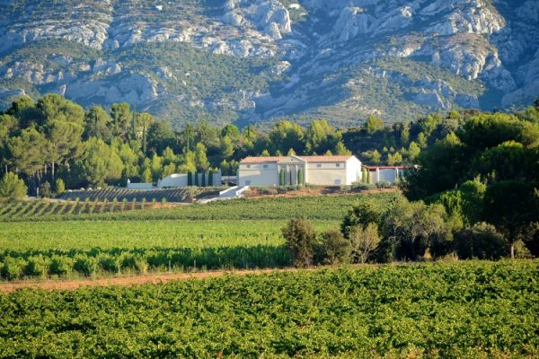 The King of Rosé is in Provence, France: Chateau Gassier