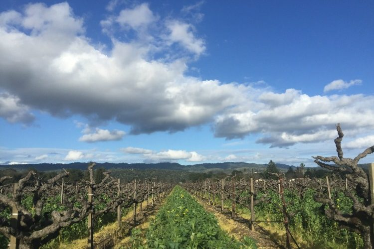 St. Helena Vineyard on The Wine SIren