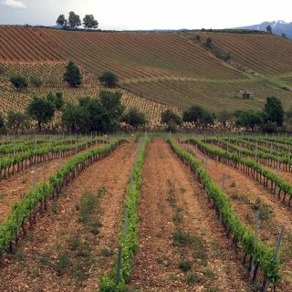 Unique varietals, extraordinary wines, Bierzo Spain is unlike any other wine destination.