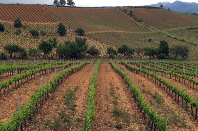 Unique varietals, extraordinary wines, Bierzo Spain is unlike any other wine destination.