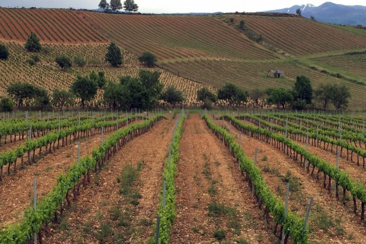 El Bierzo, Spain. The Wine World's Best Kept Secret