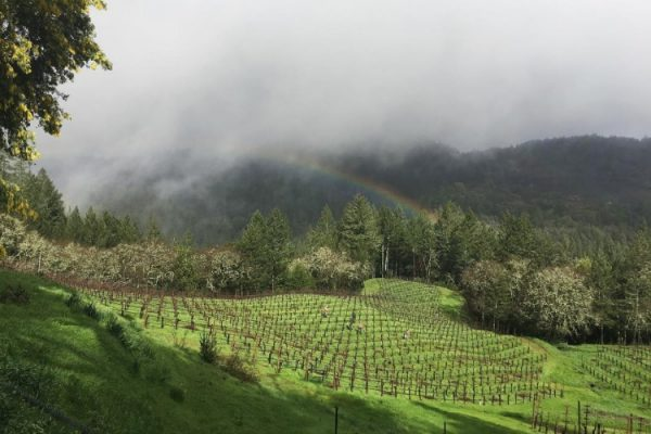 Sonoma's Rugged Terroir Shines with Cornell Vineyards {VIDEO}