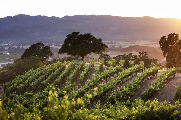 Napa Valley's Frank Family Vineyard is first location was Winston Hill in Rutherford