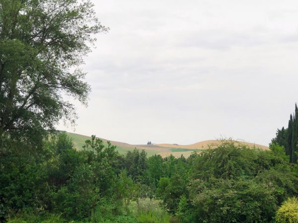 Four Tuscan Wine Adventures: Travel to Tuscany