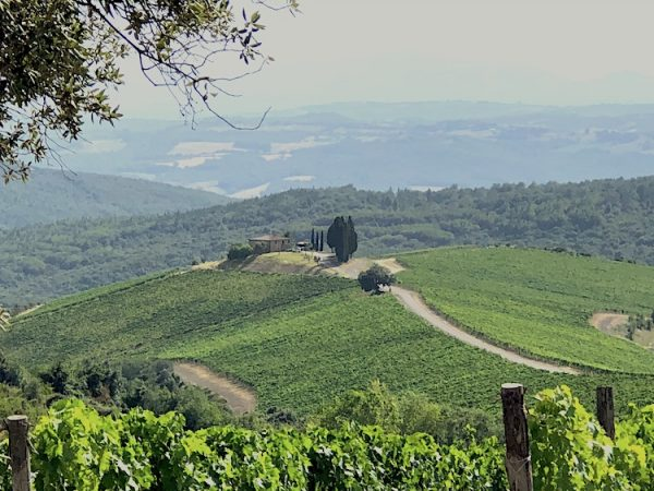 La vue de Campo de Drago de Castiglion del Bosco Vignobles dédiés à la production de Brunello