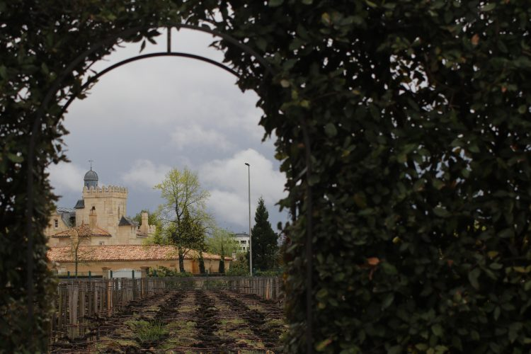 A peek at the oh so ancient vineyard of Pape Clement