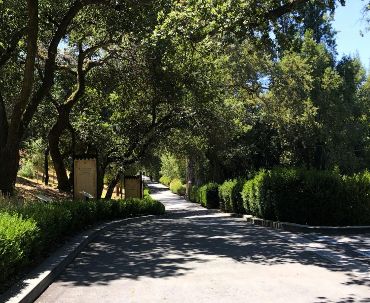 A tree lined pathway greets you