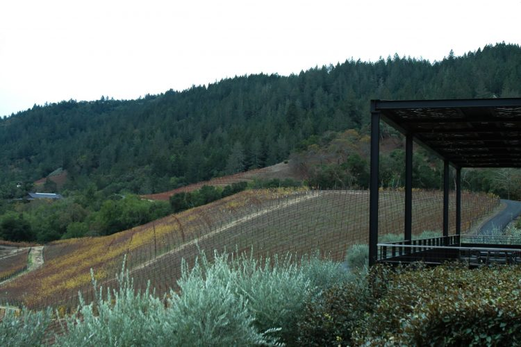 View of Harlan and Bond Wineries vines grow