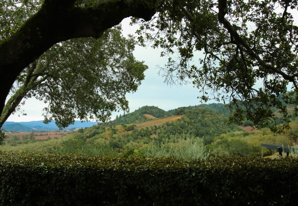 View from of Napa Valley from Promontory Winery, Photo by Kelly Mitchell, The WIne Siren