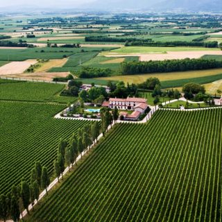 The Romance of Friuli's Zorzettig