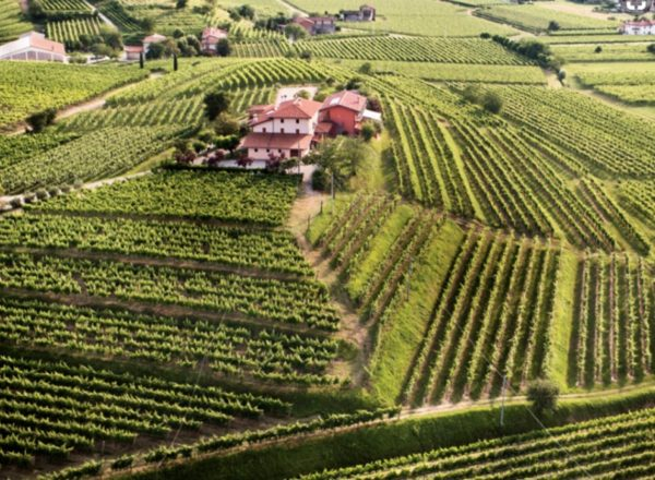 Fascinating vineyards surround Zorzettig Winery in Friuli, Italy